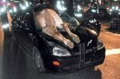 در صورت تصادف با حیوانات در جاده باید چه اقداماتی انجام دهید؟