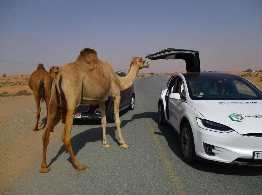 عجیب ترین قوانین خودرویی در کشورهای مختلف جهان!
